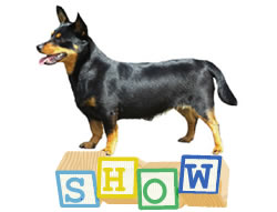 Lancashire Heeler Show  Related Questions