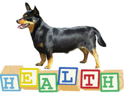 Frequently asked questions about Lancashire Heeler health issues