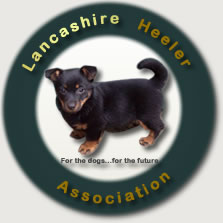 The new Lancashire Heeler Club UK, The Lancashire Heeler Association