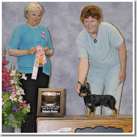 Asum Atomic Gnat , The first time a Lancashire Heeler has been in competition in conformation at an AKC show