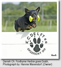 Danish Ch. Foxthyme Herbie goes Dutch