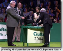 Lancashire Heeler at Crufts 2004