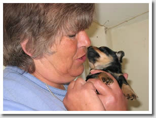 Lynne Bell with much loved Lancashire Heeler puppy