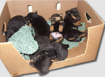 Bellas litter