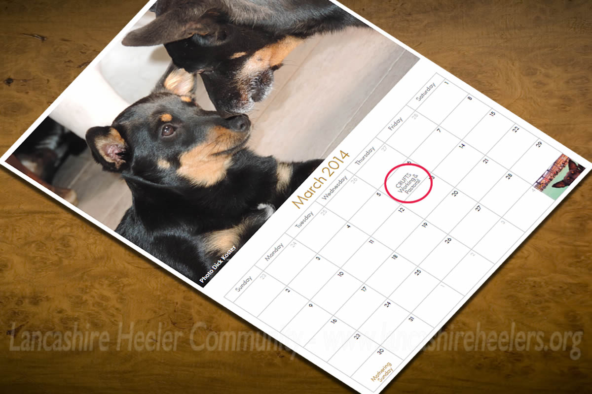 Lancashire Heeler related shows and events