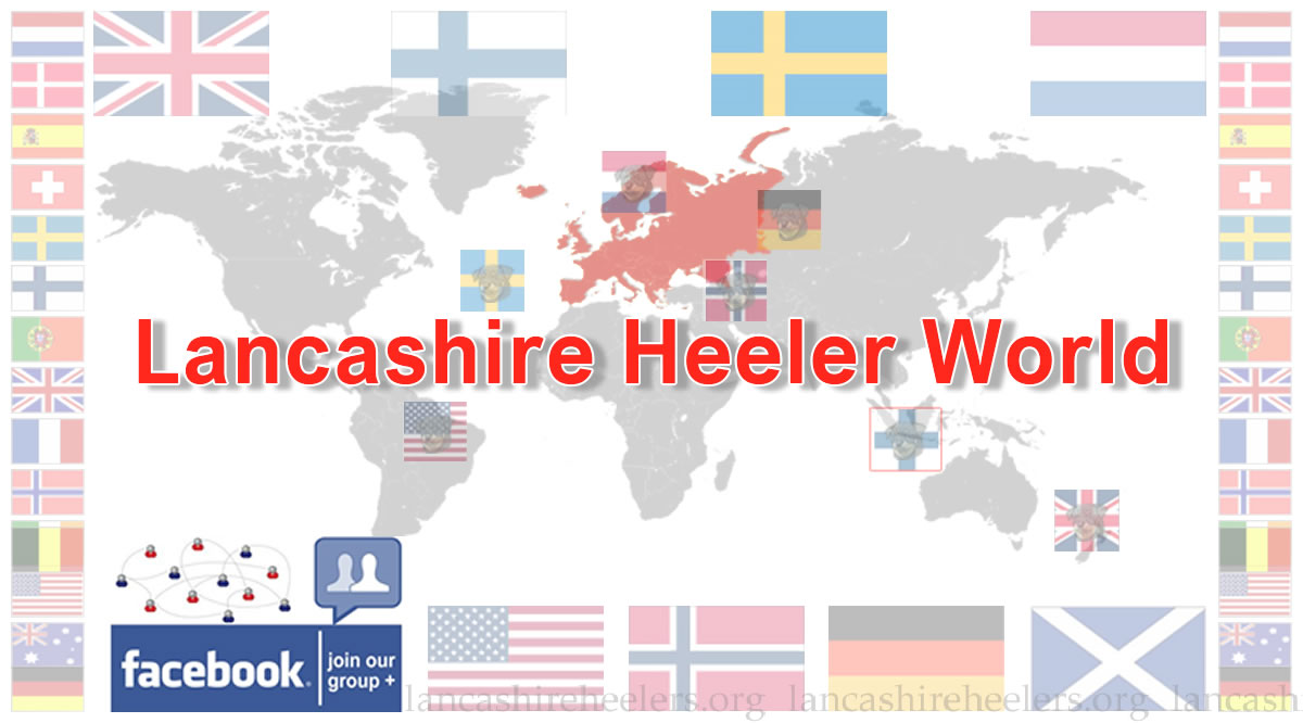 Facebook Group - Lancashire Heeler World