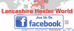 Join in the Lancashire Heeler Chat on Lancashire Heeler World