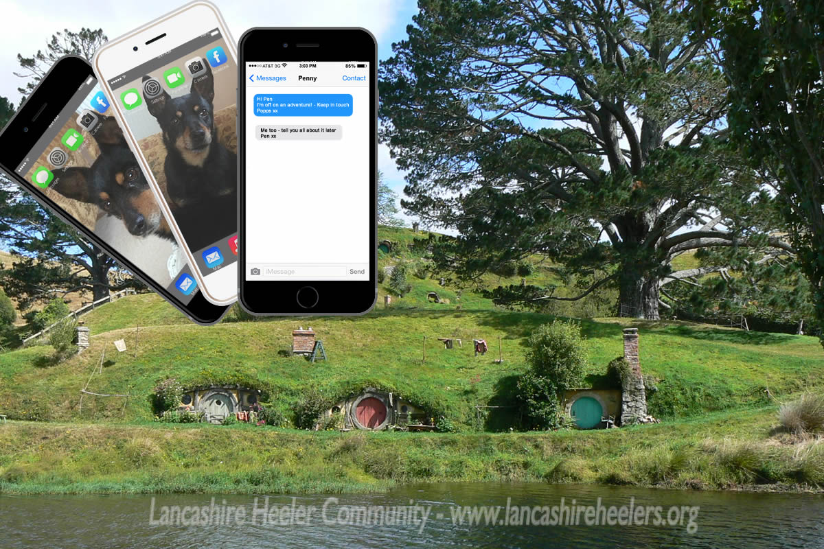 When a Lancashire Heeler emigrates to Middle Earth she keeps in touch with her best friend via text message!