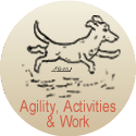 Lancashire Heeler agility, activities and work information