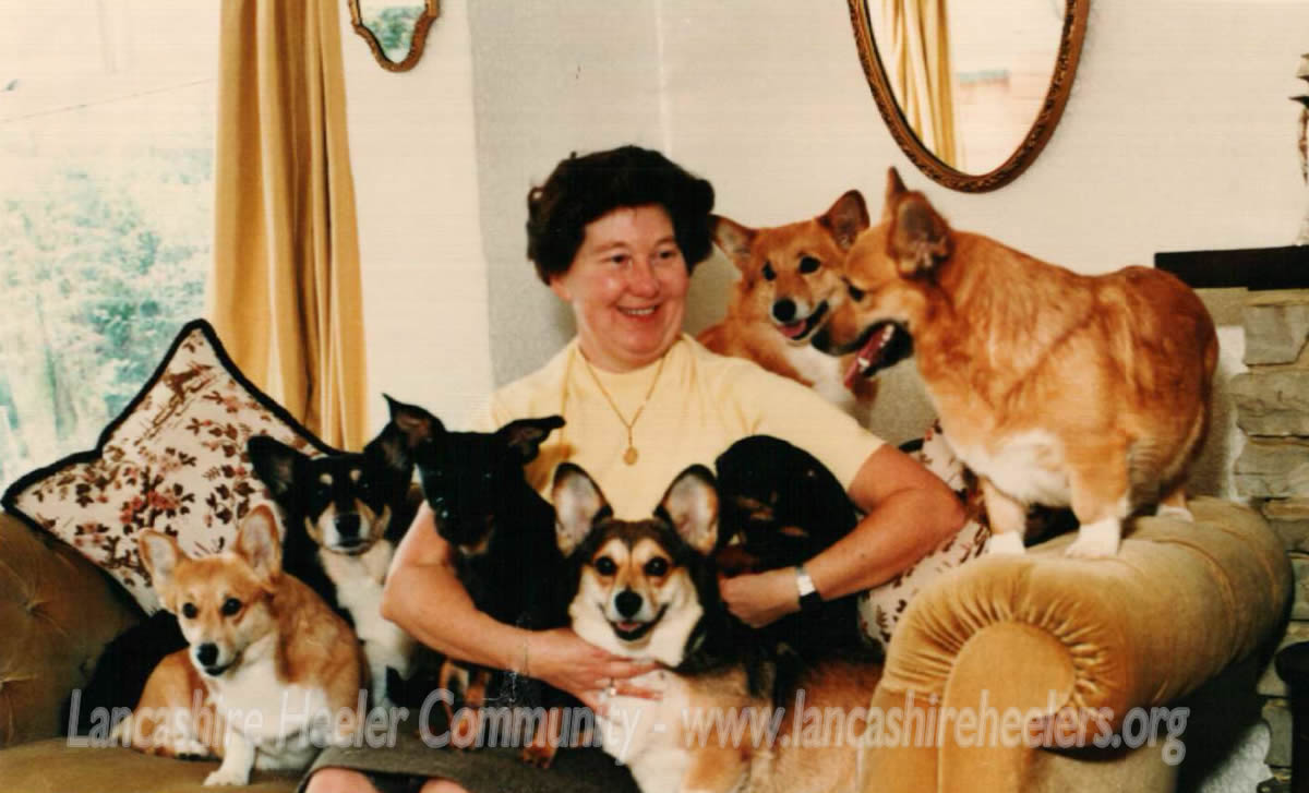 Kathie Kidd with her Lancashire Heelers and Corgis