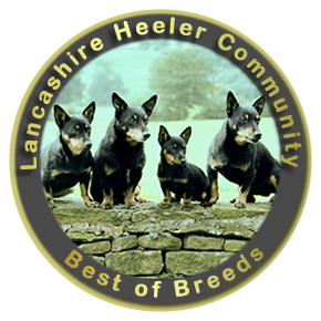 Lancashire Heeler Community - Best of Breeds