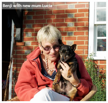 Lancashire Heeler Benji has found  new home with Lucia Dunlop