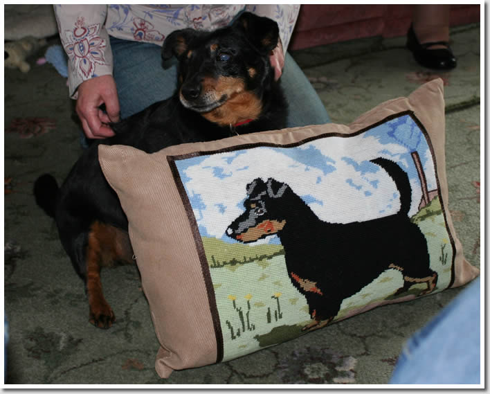 Charlie has given a beautiful Charlie cushion to The Lancashire Heeler Community