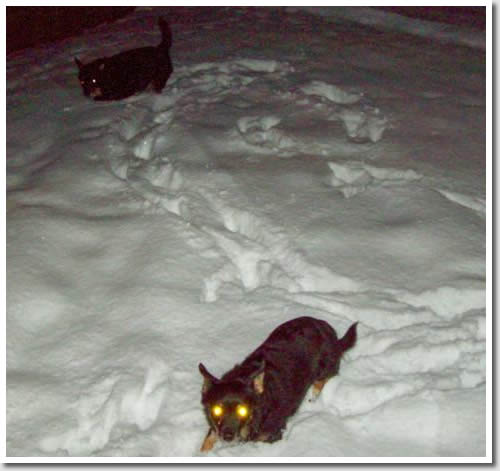 Toby and Mitzie light up the snow